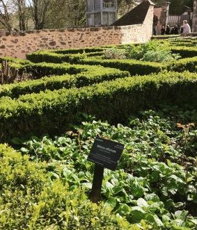 Medieval aromatic garden